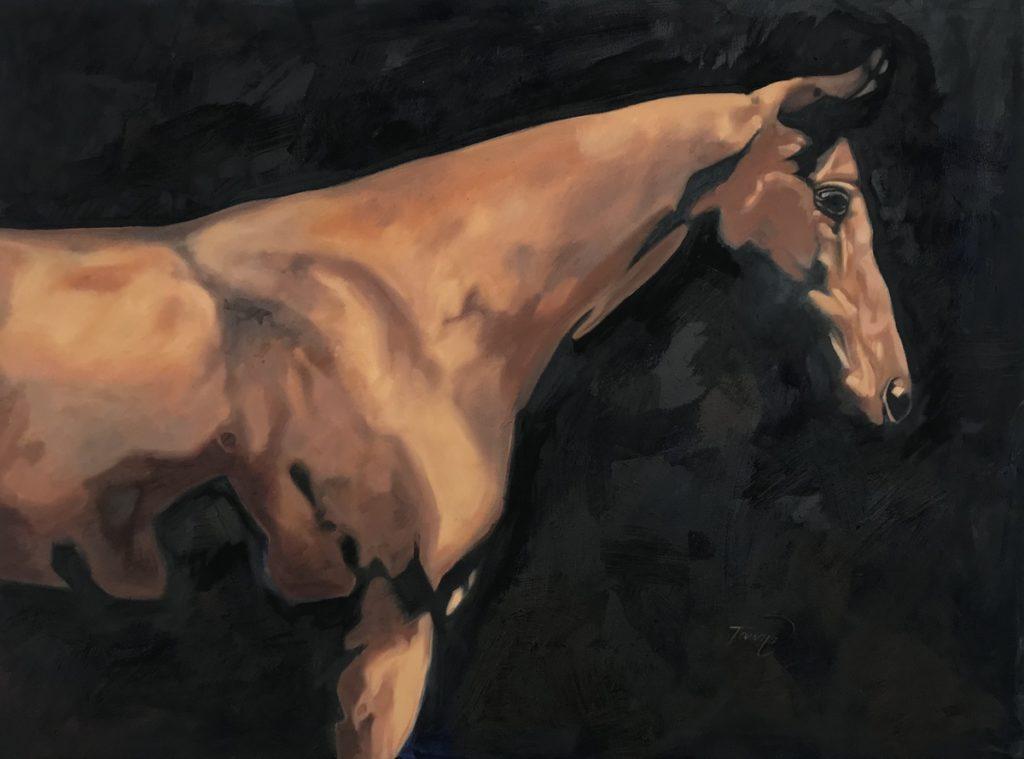bay akhal-teke horse on a black background